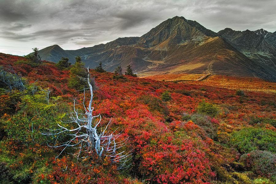 Autumn Color Carpet,Krimpenbach Alm, Stubaier Alpen, Tirol, Österreich