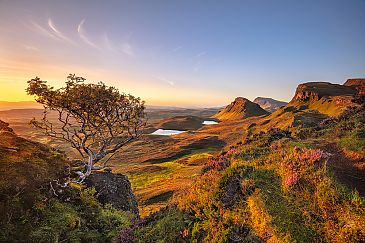Lonely Tree, Isle of Skye, Schottland